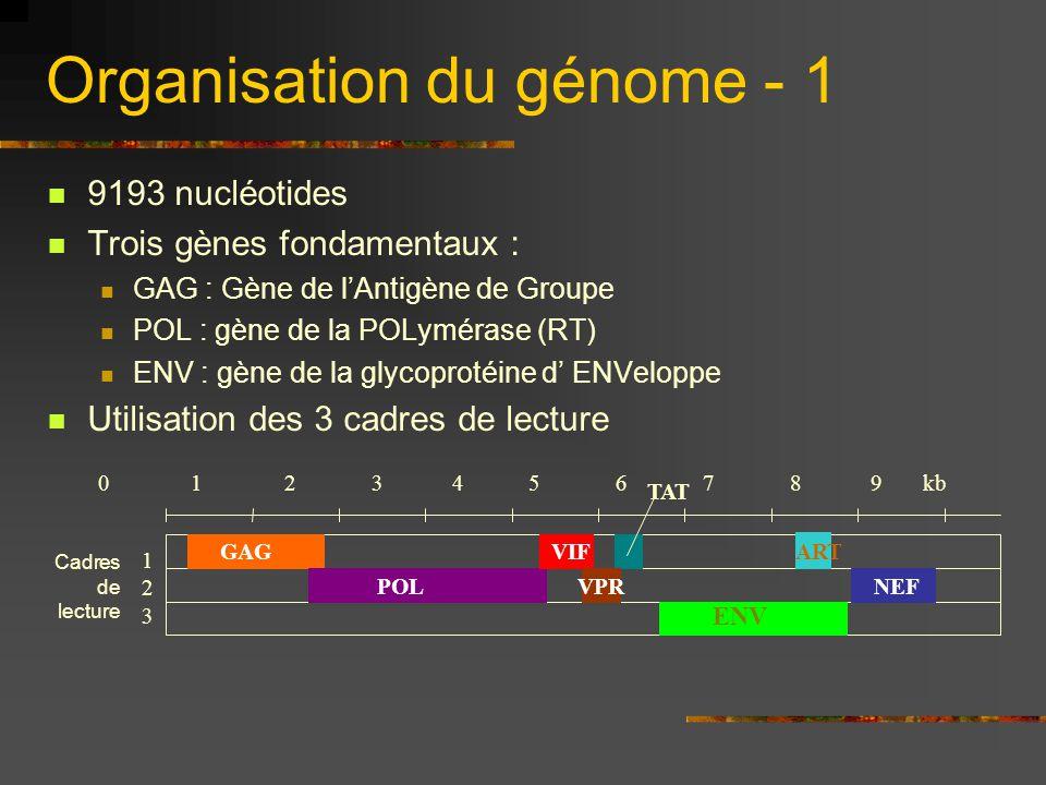 Organisation du génome - 1