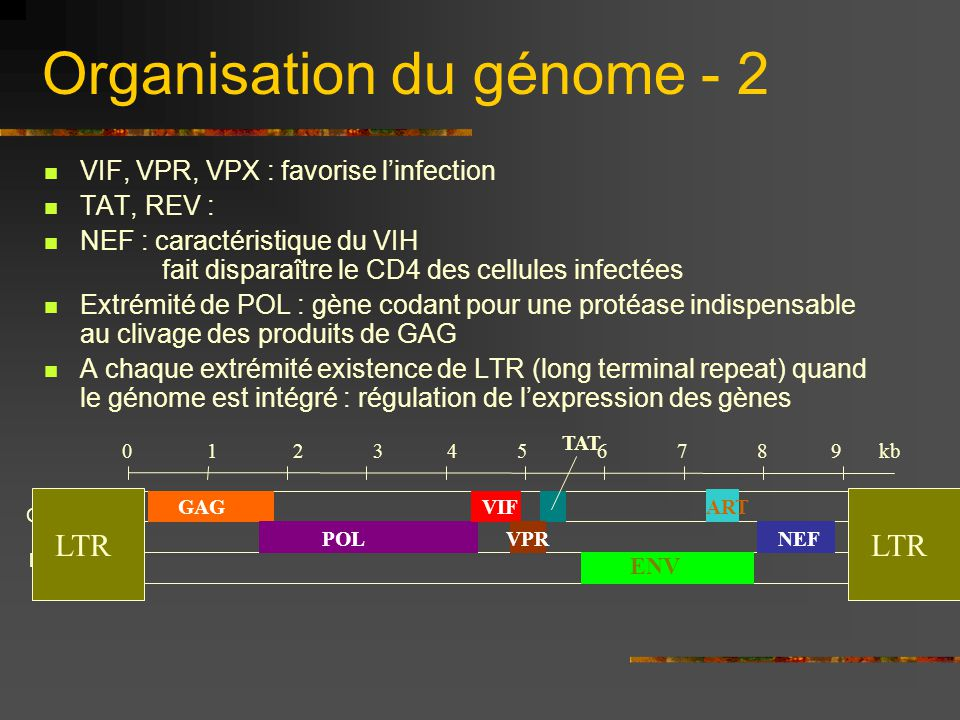 Organisation du génome - 2