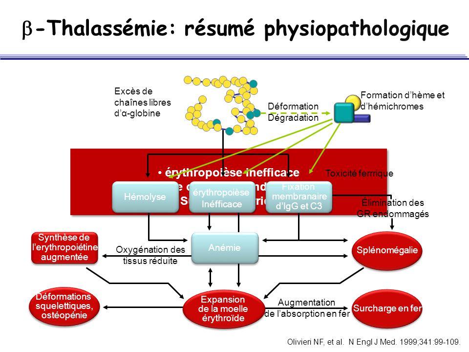 -Thalassémie: résumé physiopathologique