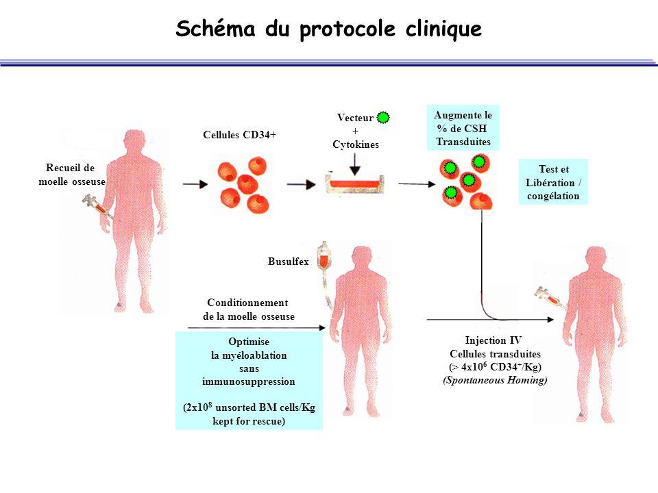 Schéma du protocole clinique