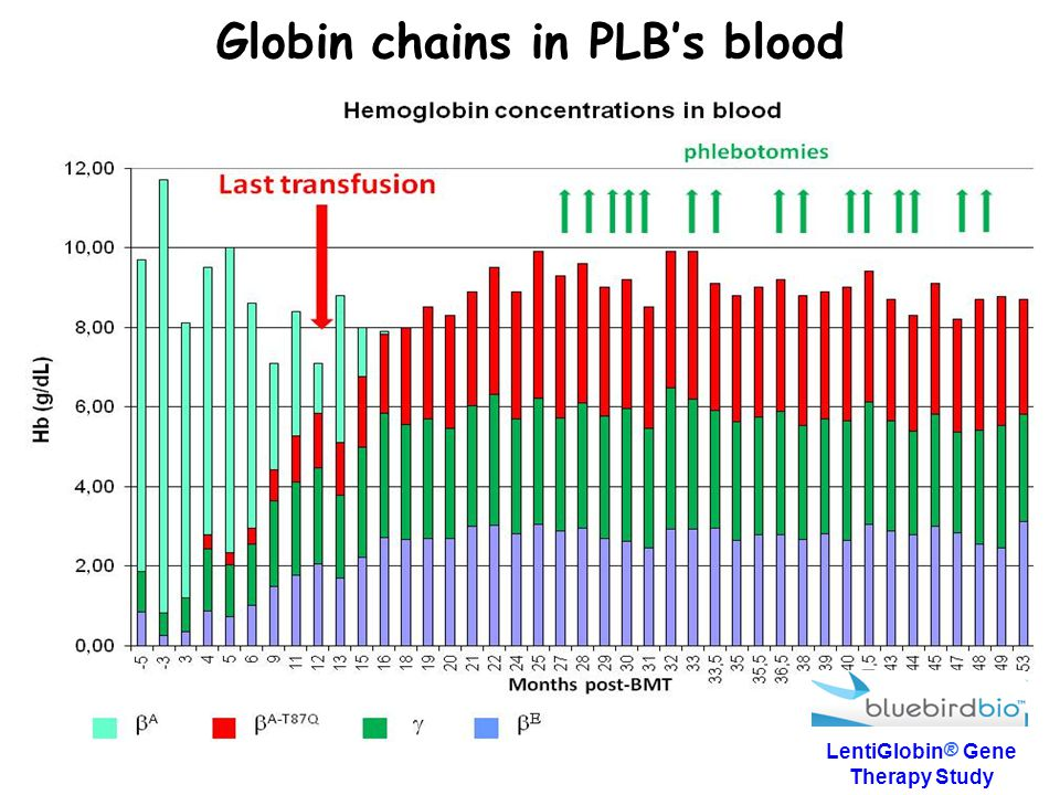 Globin chains in PLB's blood