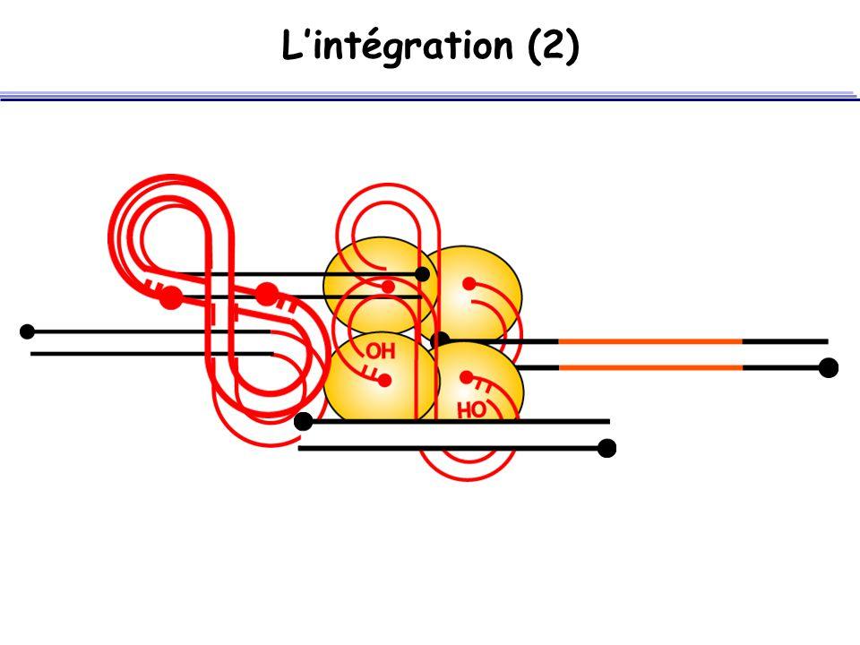 L'intégration (2)