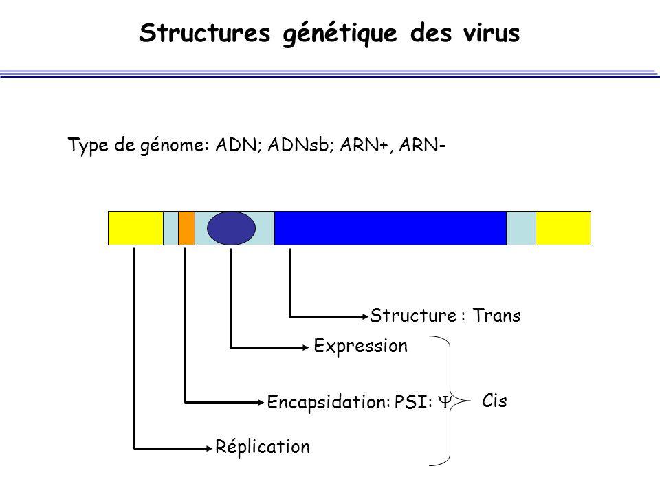 Structures génétique des virus