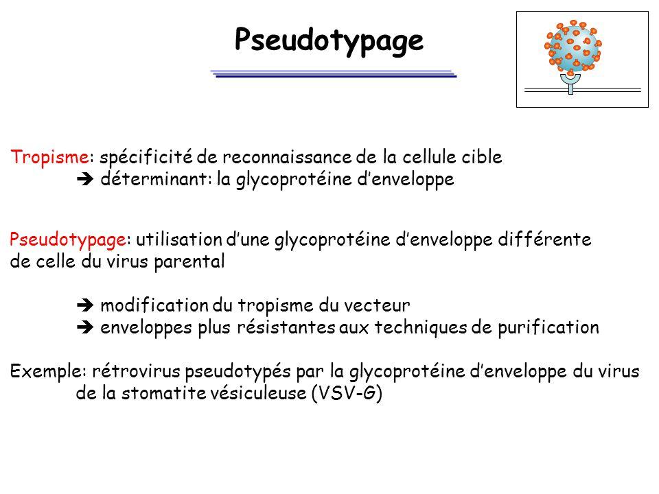 Pseudotypage Tropisme: spécificité de reconnaissance de la cellule cible.  déterminant: la glycoprotéine d'enveloppe.