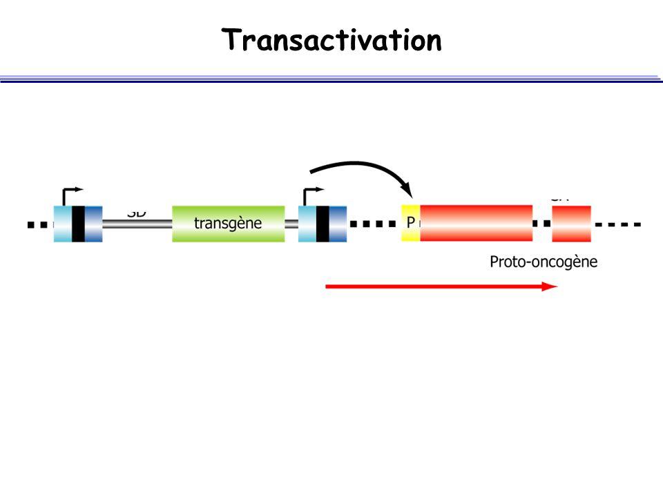 Transactivation 28