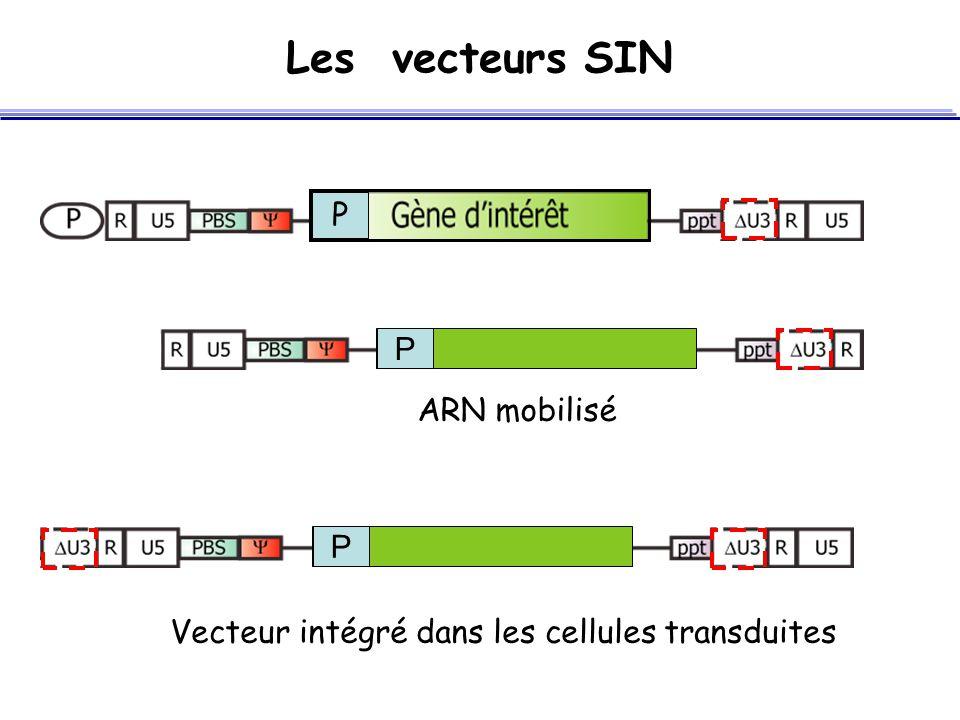 Les vecteurs SIN P P ARN mobilisé P