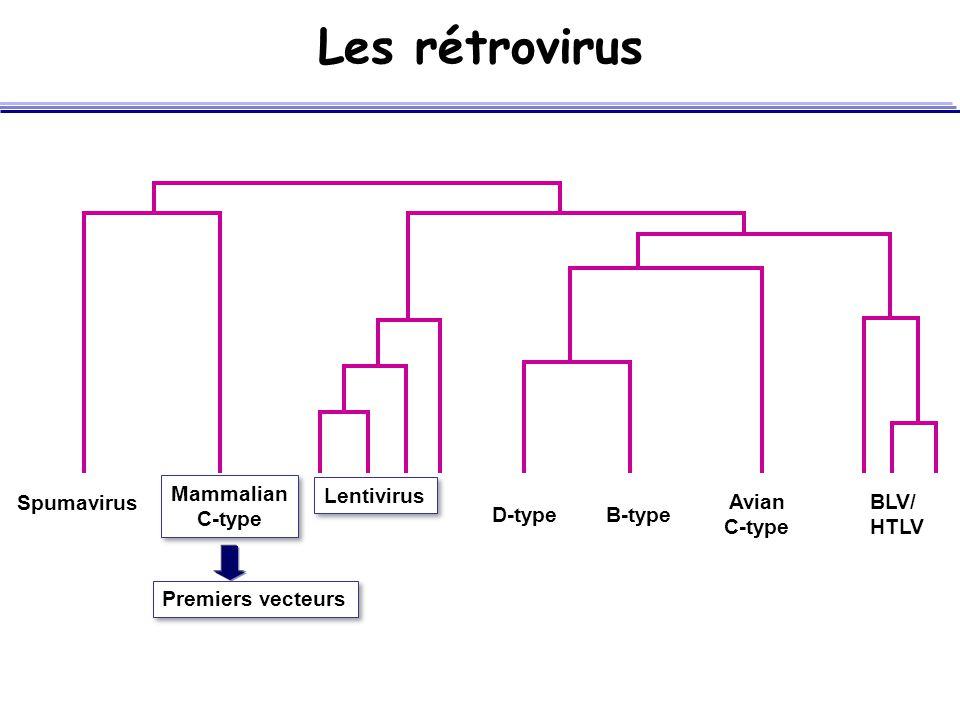 Les rétrovirus Mammalian C-type Lentivirus Spumavirus Avian C-type