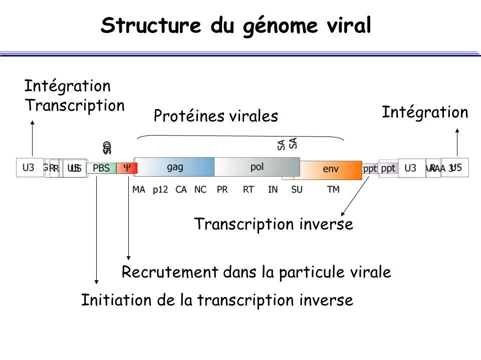 Structure du génome viral