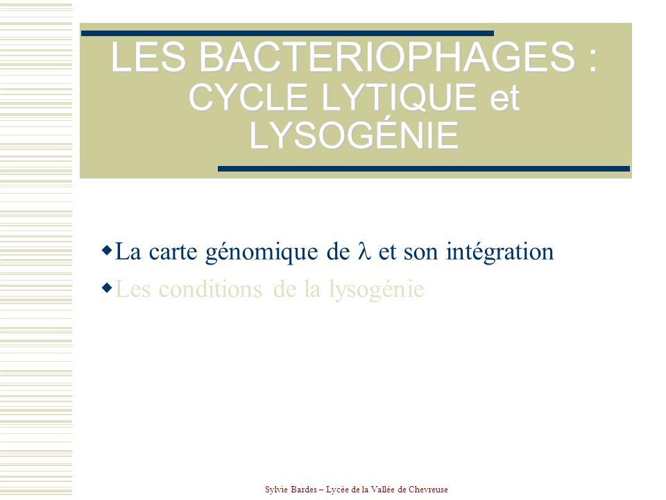 LES BACTERIOPHAGES : CYCLE LYTIQUE et LYSOGÉNIE