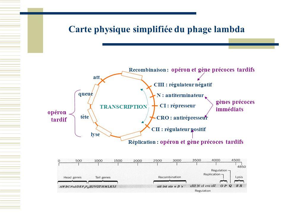 Carte physique simplifiée du phage lambda