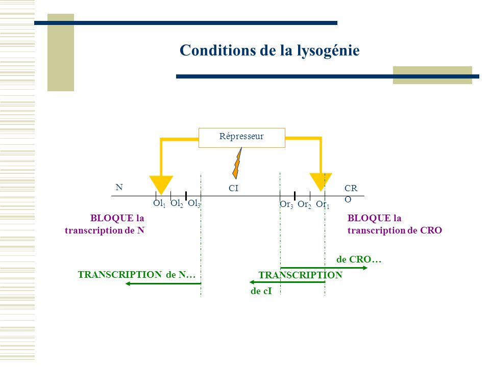 Conditions de la lysogénie