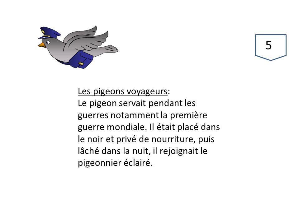 57 Les pigeons voyageurs:
