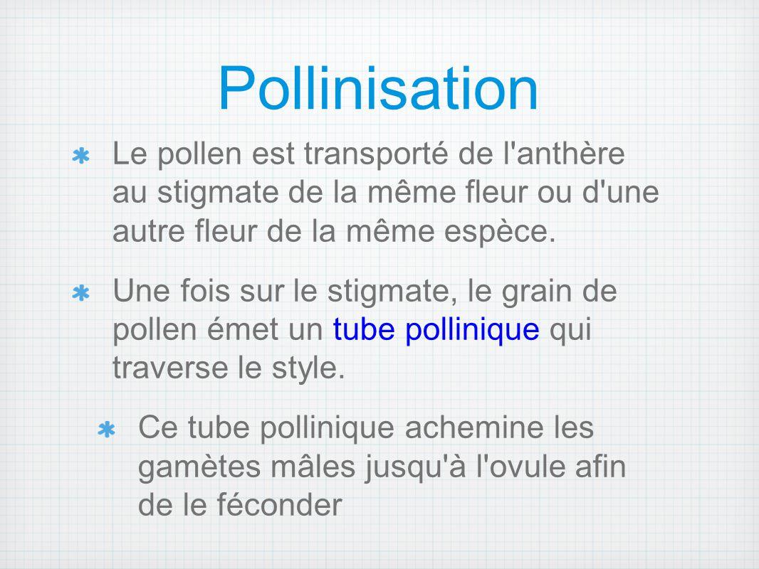 Pollinisation Le pollen est transporté de l anthère au stigmate de la même fleur ou d une autre fleur de la même espèce.