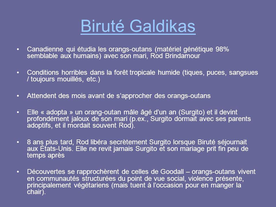 Biruté Galdikas Canadienne qui étudia les orangs-outans (matériel génétique 98% semblable aux humains) avec son mari, Rod Brindamour.
