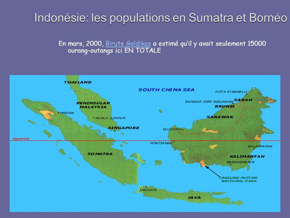 Indonésie: les populations en Sumatra et Bornéo