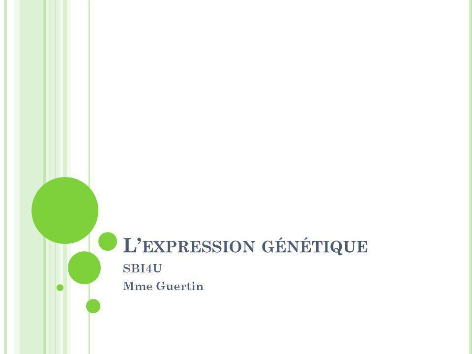 L'expression génétique