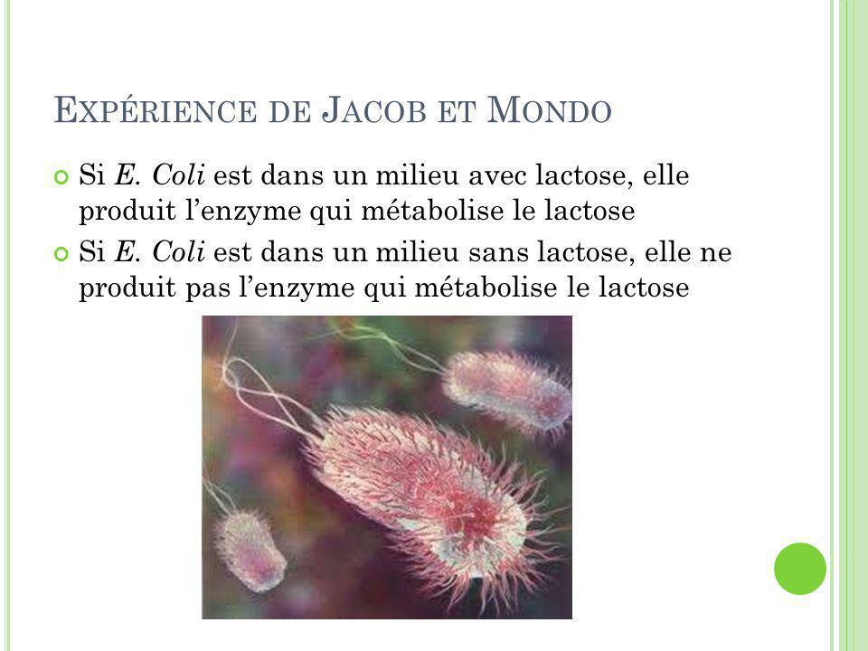 Expérience de Jacob et Mondo
