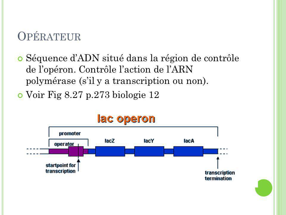 Opérateur Séquence d'ADN situé dans la région de contrôle de l'opéron. Contrôle l'action de l'ARN polymérase (s'il y a transcription ou non).