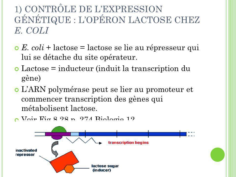 1) CONTRÔLE DE L'EXPRESSION GÉNÉTIQUE : L'OPÉRON LACTOSE CHEZ E. COLI