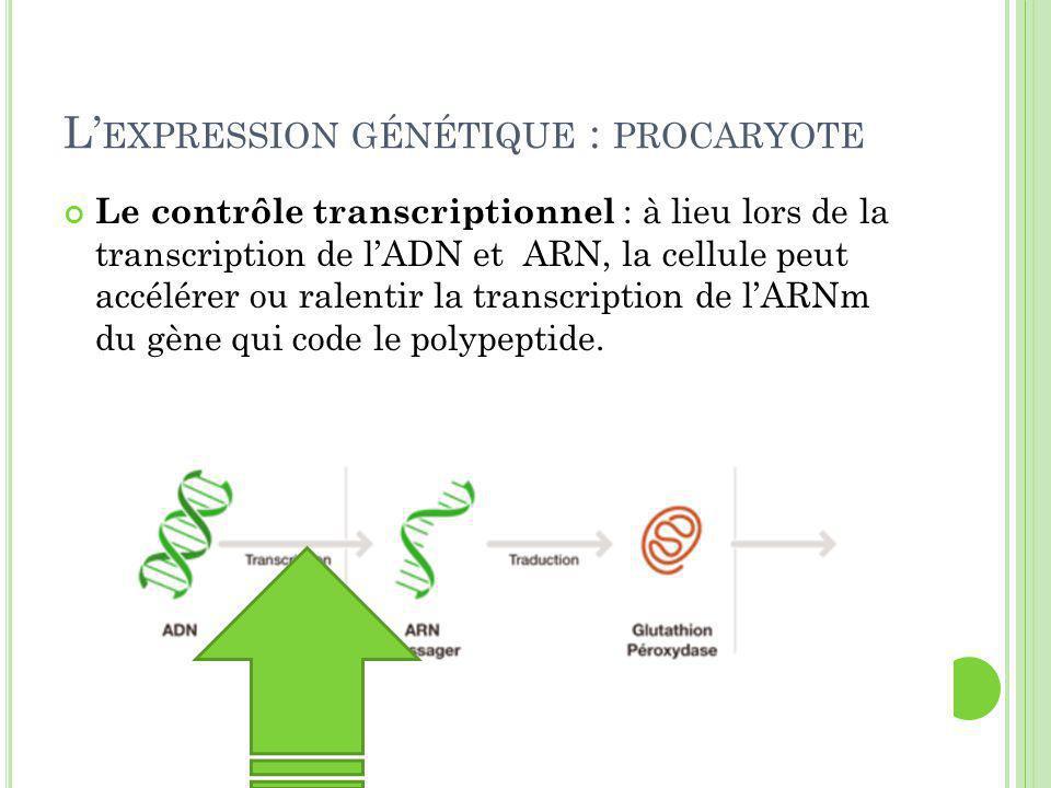 L'expression génétique : procaryote
