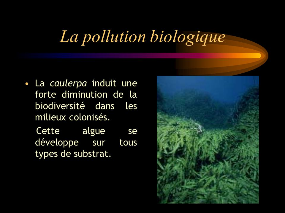 La pollution biologique