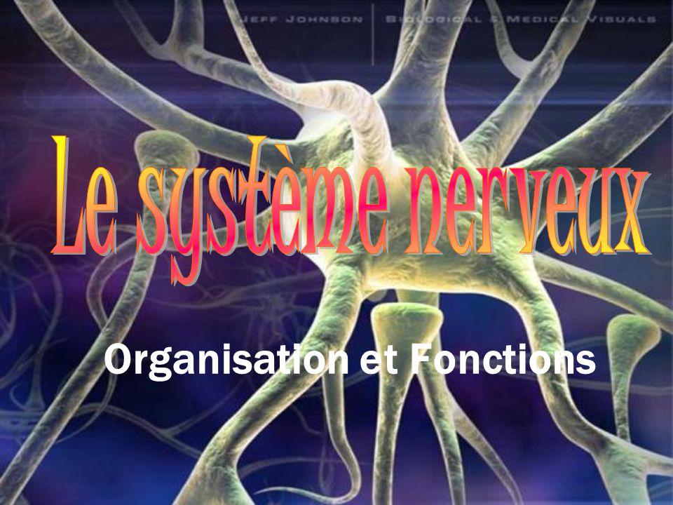 Organisation et Fonctions