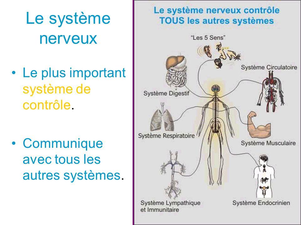 Le système nerveux Le plus important système de contrôle.