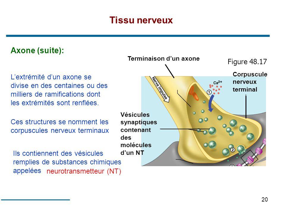 Tissu nerveux Axone (suite): Figure 48.17