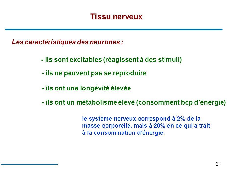 Tissu nerveux Les caractéristiques des neurones :