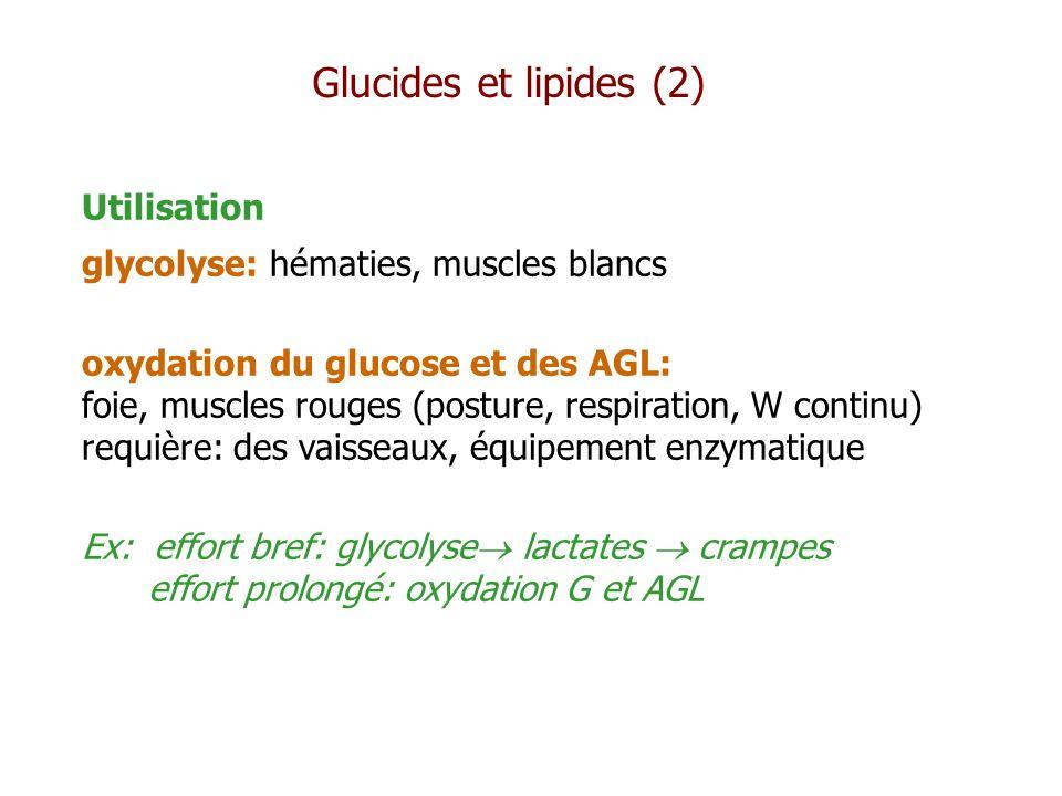 Glucides et lipides (2) Utilisation