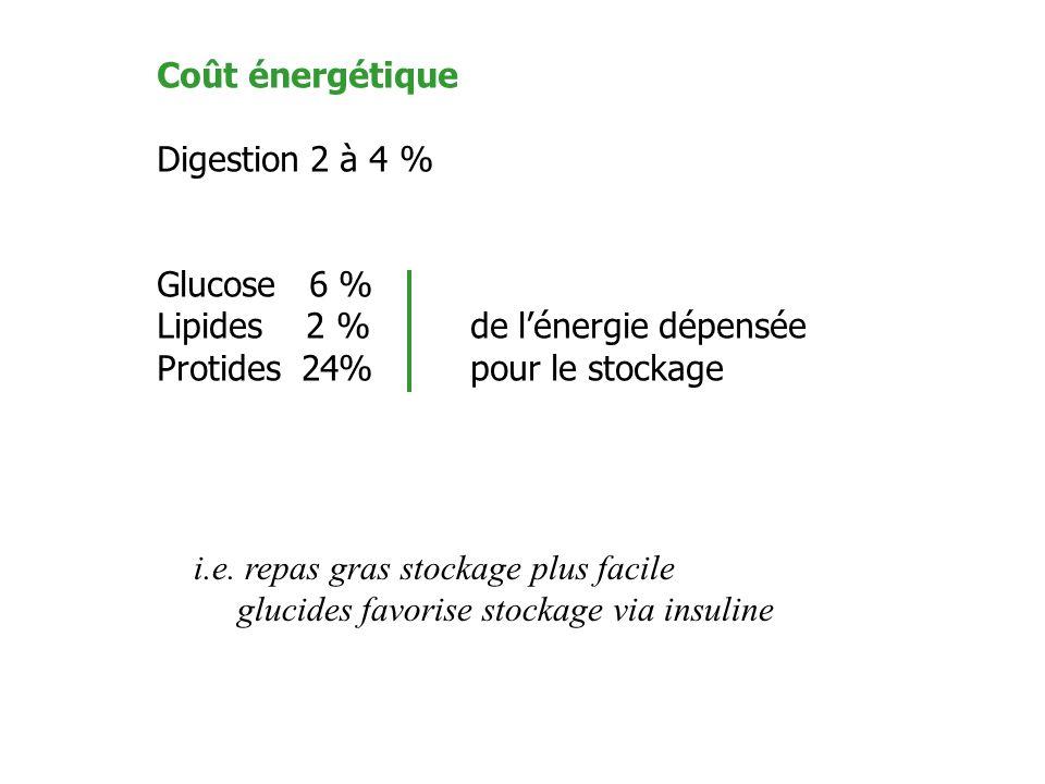 Coût énergétique Digestion 2 à 4 % Glucose 6 % Lipides 2 % de l'énergie dépensée Protides 24% pour le stockage.