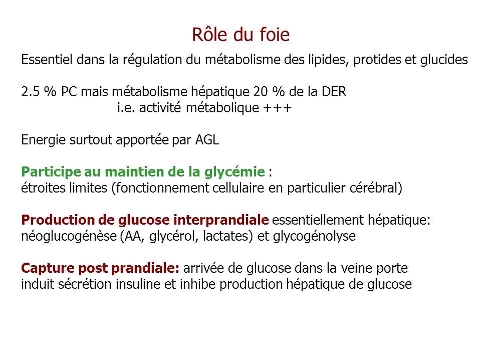 Rôle du foie Essentiel dans la régulation du métabolisme des lipides, protides et glucides. 2.5 % PC mais métabolisme hépatique 20 % de la DER.