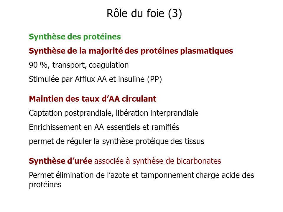 Rôle du foie (3) Synthèse des protéines
