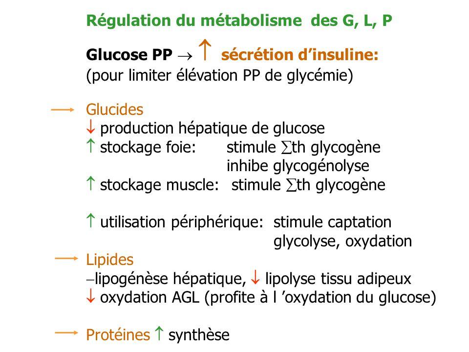 Régulation du métabolisme des G, L, P
