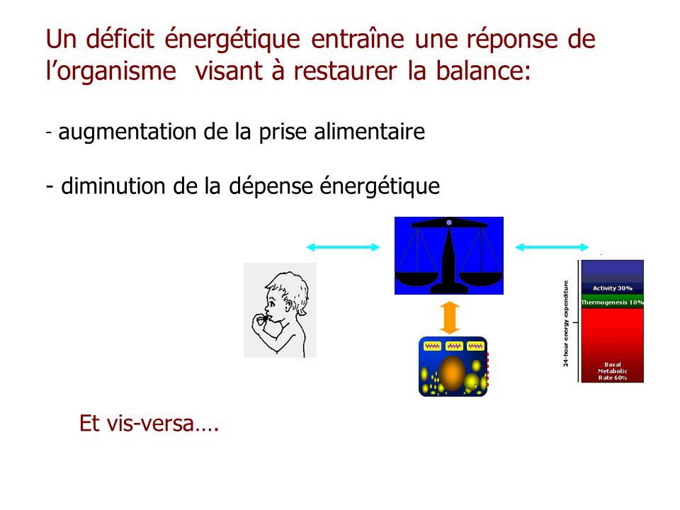 Un déficit énergétique entraîne une réponse de