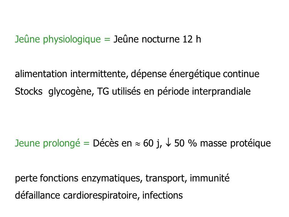Jeûne physiologique = Jeûne nocturne 12 h