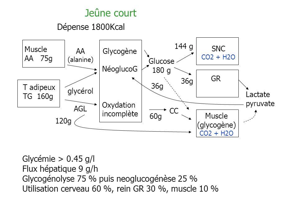 Jeûne court Dépense 1800Kcal Glycémie > 0.45 g/l