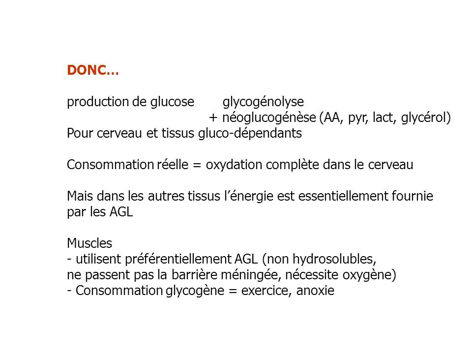 DONC… production de glucose glycogénolyse. + néoglucogénèse (AA, pyr, lact, glycérol) Pour cerveau et tissus gluco-dépendants.