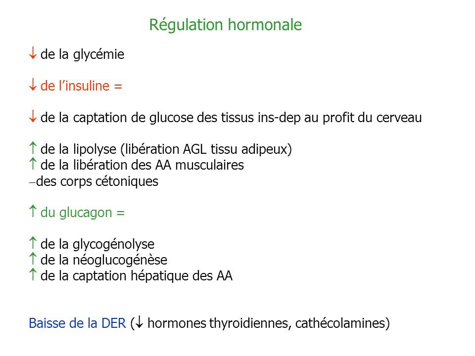 Régulation hormonale  de la glycémie  de l'insuline =