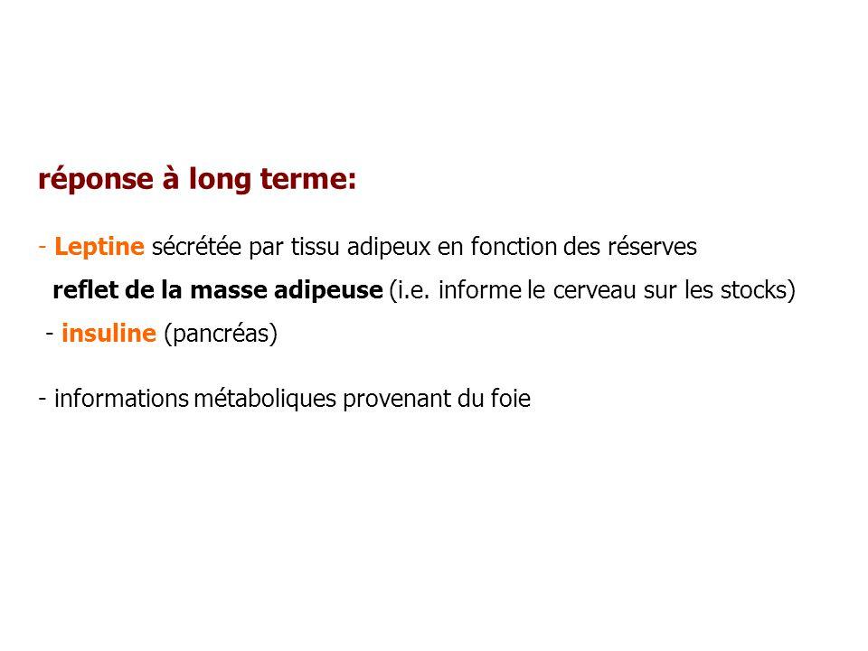 réponse à long terme: Leptine sécrétée par tissu adipeux en fonction des réserves.