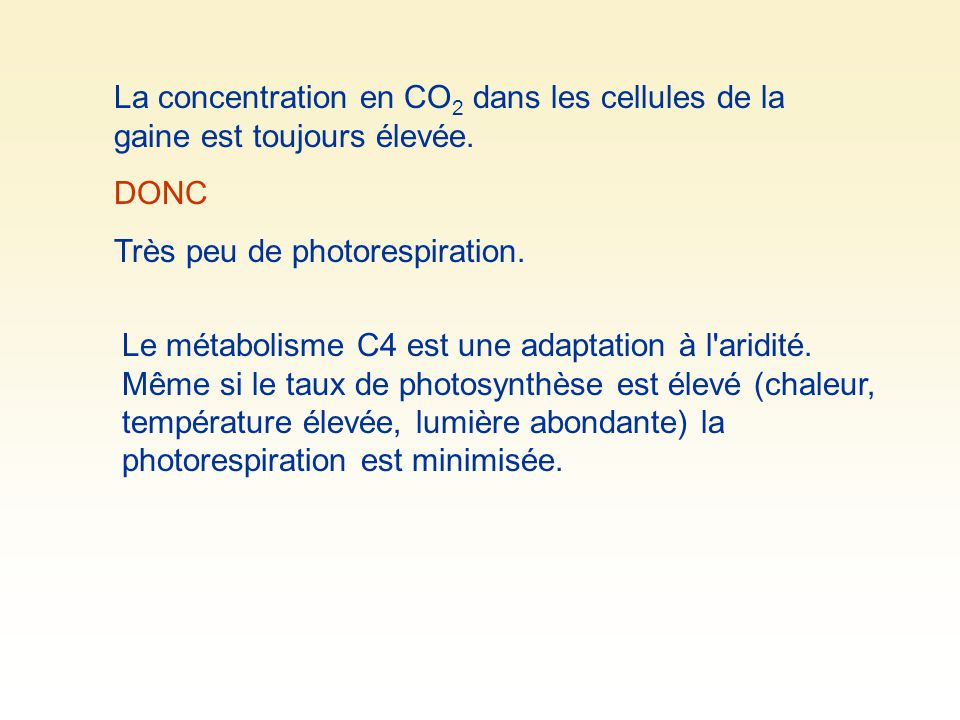La concentration en CO2 dans les cellules de la gaine est toujours élevée.