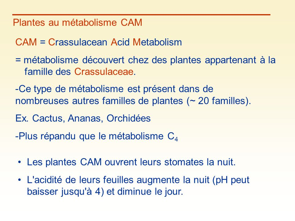 Plantes au métabolisme CAM