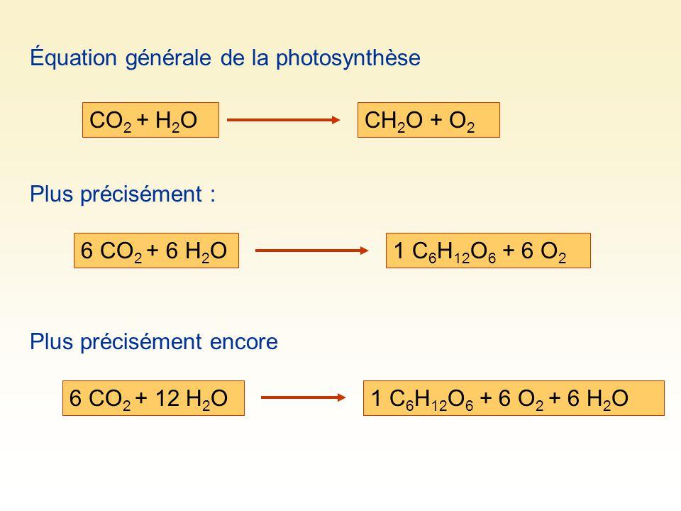 Équation générale de la photosynthèse