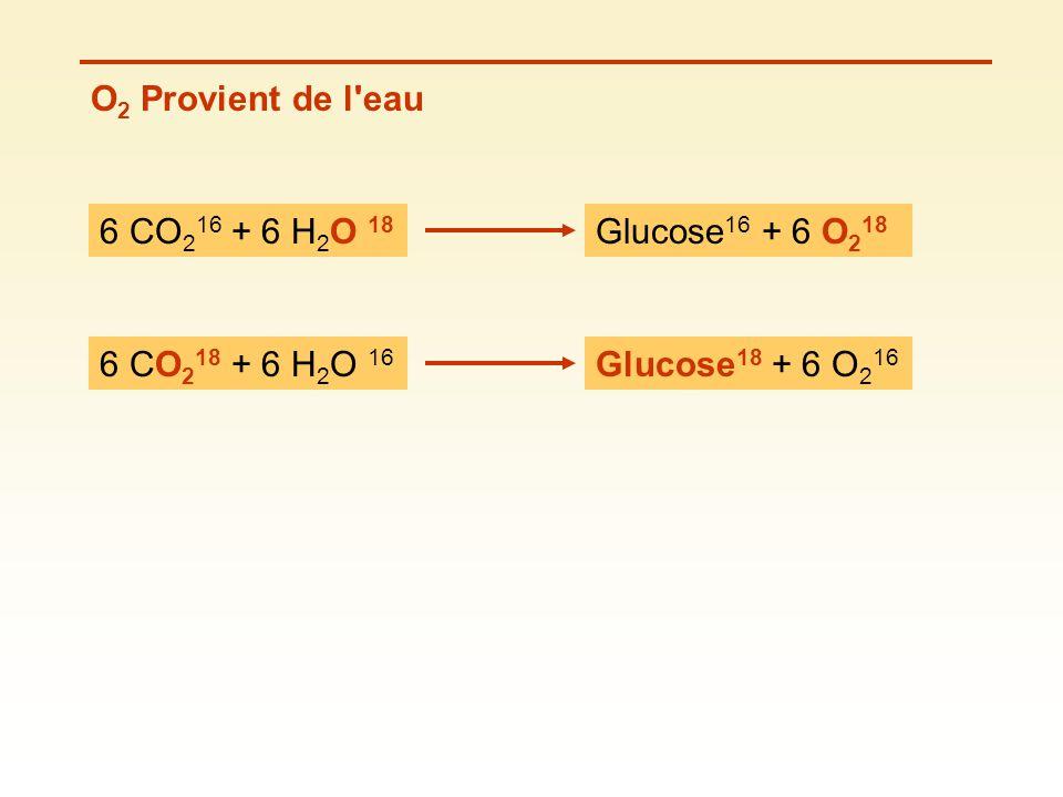 O2 Provient de l eau 6 CO216 + 6 H2O 18 Glucose16 + 6 O218 6 CO218 + 6 H2O 16 Glucose18 + 6 O216
