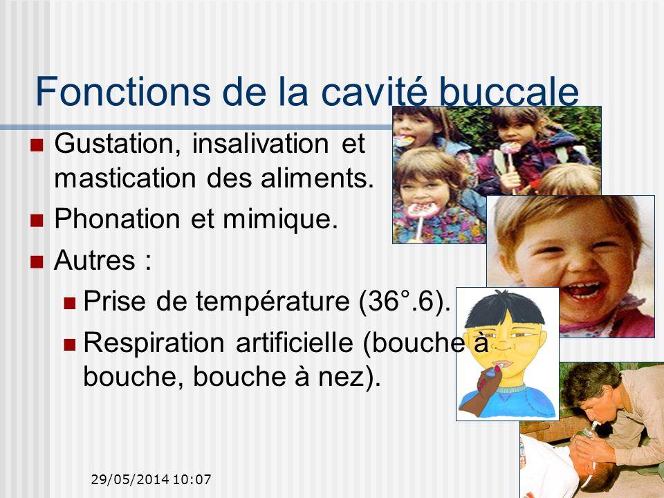 Fonctions de la cavité buccale