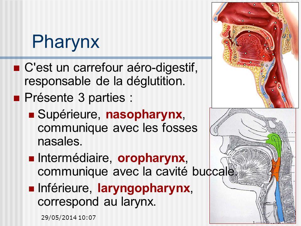 Pharynx C est un carrefour aéro-digestif, responsable de la déglutition. Présente 3 parties :