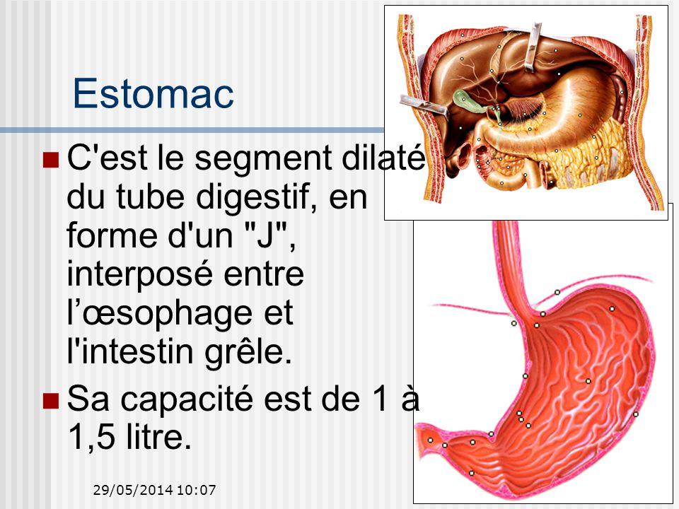 Estomac C est le segment dilaté du tube digestif, en forme d un J , interposé entre l'œsophage et l intestin grêle.