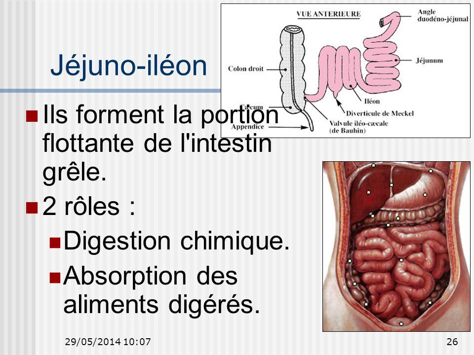 Jéjuno-iléon Ils forment la portion flottante de l intestin grêle.