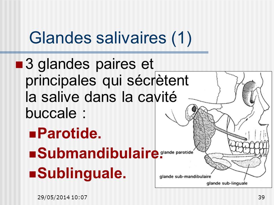Glandes salivaires (1) 3 glandes paires et principales qui sécrètent la salive dans la cavité buccale :