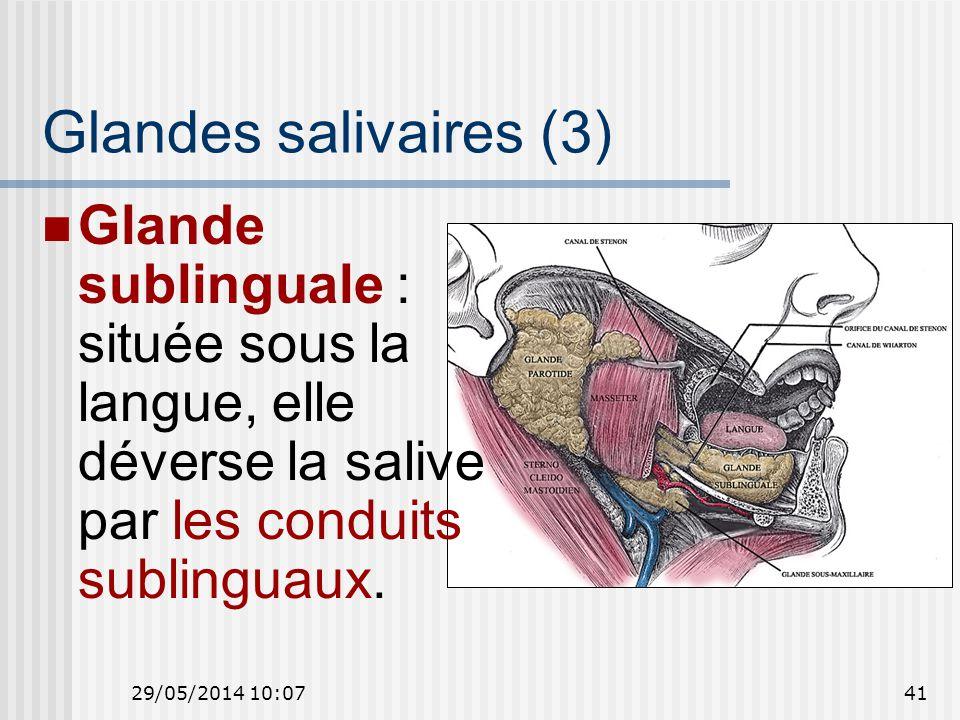 Glandes salivaires (3) Glande sublinguale : située sous la langue, elle déverse la salive par les conduits sublinguaux.